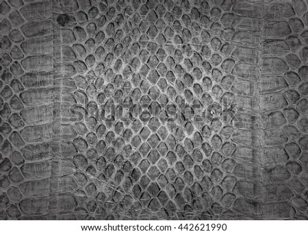 Snake skin background,Snake skin leather texture.Black and white. - stock photo