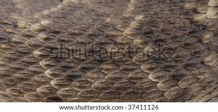 Snake Skin Close Up - stock photo