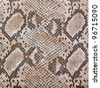 snake skin leather imitation - stock photo