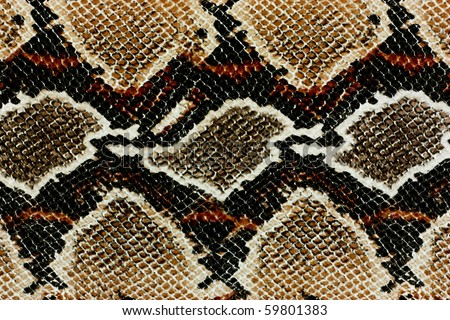 snake skin pattern - stock photo