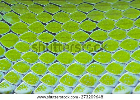 Snake skin pattern background,Striped snake scales - stock photo