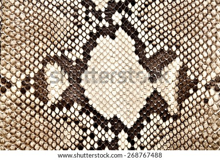 snake skin, python skin, exotic animal, vegan leather, faux leather - stock photo