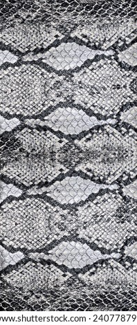 Snake skin, reptile  - stock photo