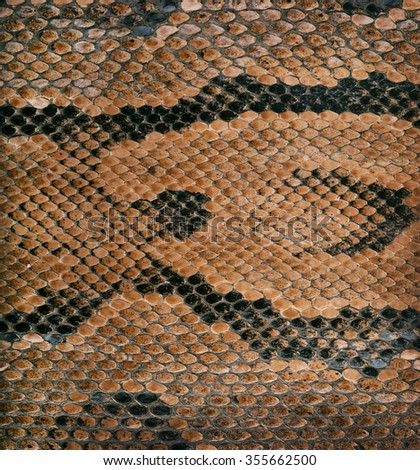 snake skin texture as a background - stock photo