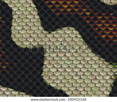 snake skin texture for background - stock photo