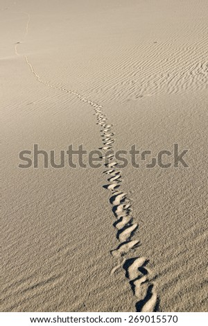 snake track cutting across the sand at Eureka Dunes in Death Valley National Park - stock photo