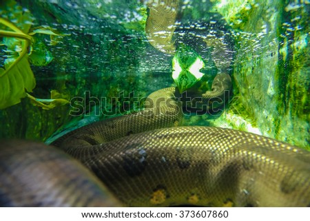 snake under water - stock photo