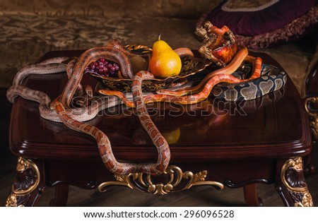 snakes on wood table and dish with fruits - stock photo