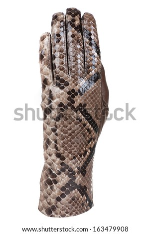 snakeskin gloves - stock photo
