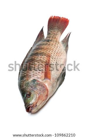 Snapper Fish - stock photo