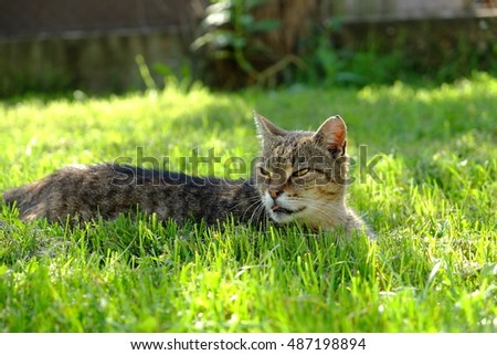 Snapshot of cat in grass. Unfiltered , natural photo