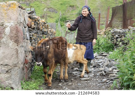 SNO, GEORGIA - JULY 1, 2014: Old woman herding cows in a Caucasian village on July 1, 2014 in Sno, Georgia, Europe