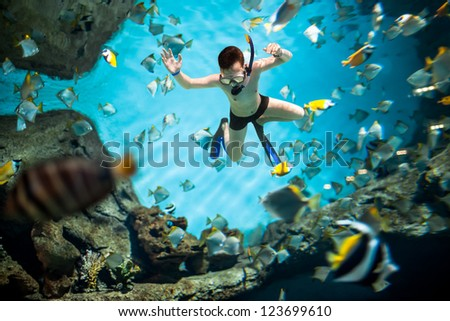 Snorkeler diving along the brain coral underwater - stock photo
