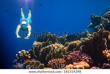 snorkeling man - stock photo