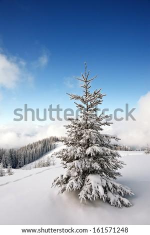 snovy trees on winter mountains - stock photo