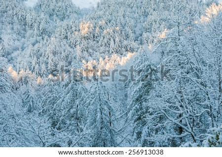 Snow and ice covered trees after winter storm in southern appalachia.