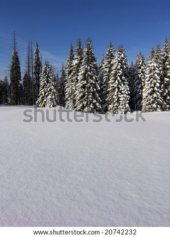 Snow and Spruce. Snow covered spruce trees and blue sky - stock photo