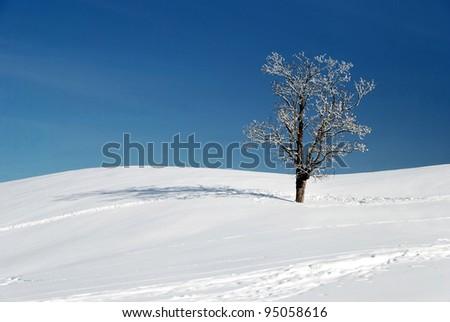 snow and tree in beautiful winter season - stock photo