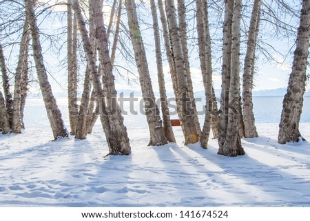 Snow and trees - stock photo