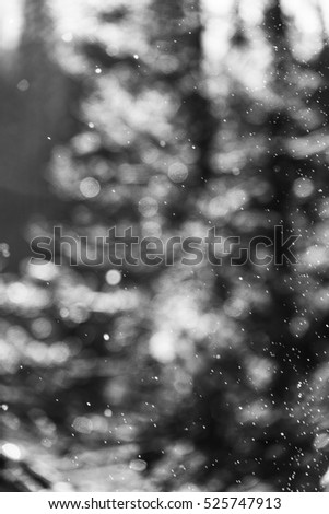 Snow Bokeh Blurred (Black and White)