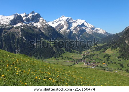 Snow capped mountains and green meadow full of yellow wildflowers
