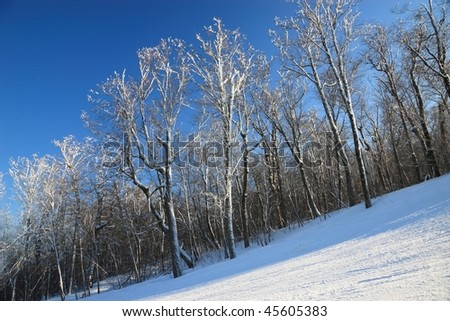 Snow clad trees on a ski trail at Belleayre Mountain Ski Resort in the Catskills Mountains of New York - stock photo