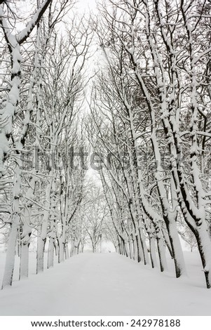 Snow-covered alley in the Park