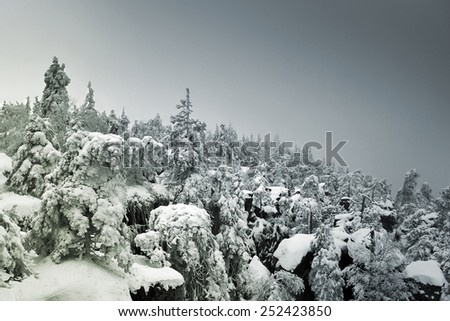 Snow covered and foggy mountainside forest - layered pines and fir disappearing in fog - stock photo