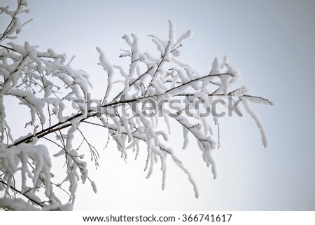 Snow-covered branch against sunset sky