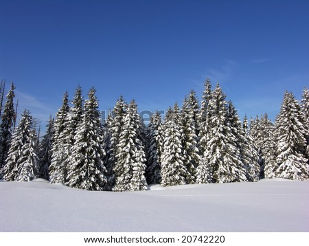 Snow covered Christmas forest. Snow covered spruce trees and blue sky - stock photo