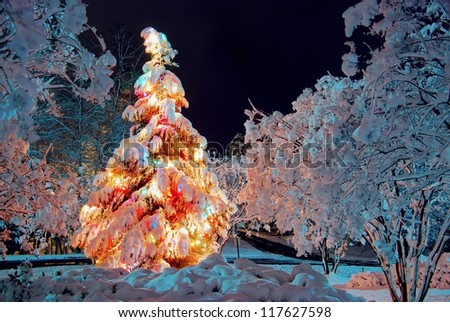 Snow covered Christmas tree at night, with colorful lights