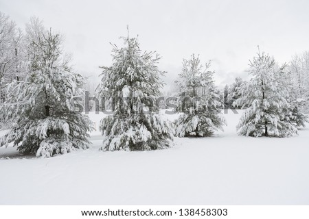 Snow covered evergreen trees, Stowe, Vermont, USA