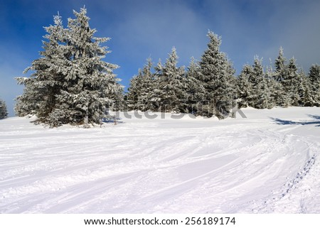 snow-covered fir in the mountains along the ski slopes - stock photo