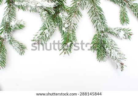 Snow-covered fir tree branch on a white background. - stock photo