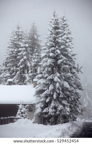 Snow covered fir trees in the forest. Winter landscape