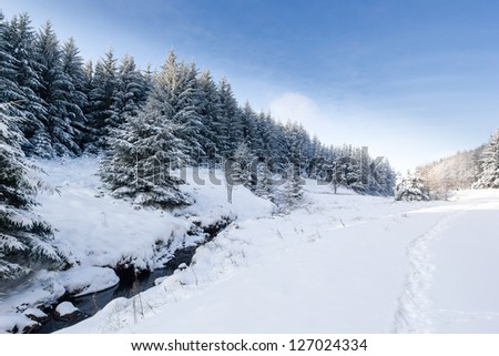 Snow covered fir trees next to a small stream in winter