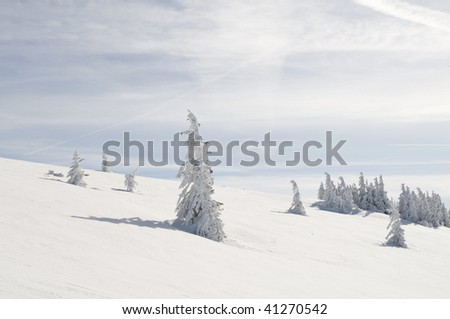 snow covered fir trees with sun - stock photo