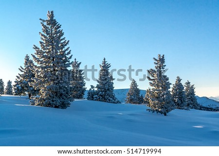 Snow-covered firs in the mountains of Khamar-Daban, Siberia