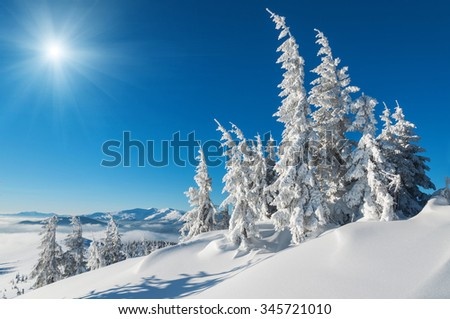 snow-covered firs in winter mountains under the sun and blue sky - stock photo