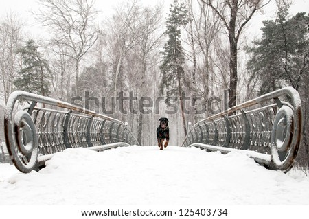 Snow covered footbridge and dog  on a foggy winter day - stock photo