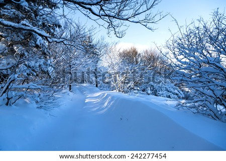 snow-covered forest and buried under snow road - stock photo