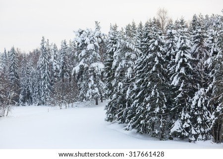 Snow covered forest and field overcast day finland winter - stock photo