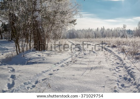 Snow-covered forest road through the trees. Nature Belarus