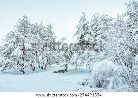 Snow-covered forest road, winter landscape. Cold and snowy winter road with blue evergreens and grey clouded skies. Christmas and New Year Tree. Copy space in the center-top and center-bottom. - stock photo