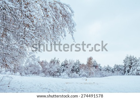 Snow-covered forest road, winter landscape. Cold and snowy winter road with blue evergreens and grey clouded skies. Christmas and New Year Tree. Copy space in the center-top and center-bottom.