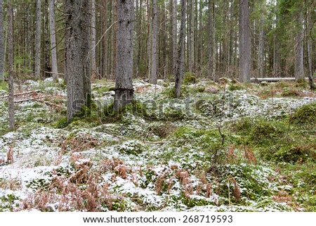snow covered forest with trails and green grass in early spring