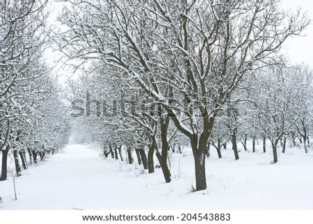 snow covered fruit garden