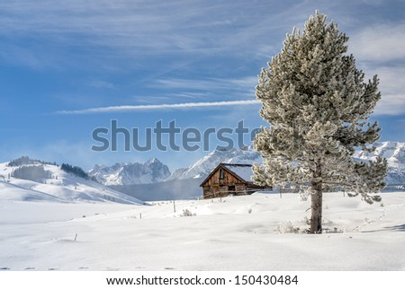 Snow covered groups and snowy pine tree winter