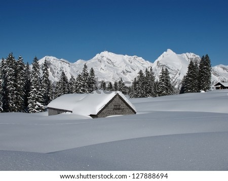 Snow covered hut, trees and Mt  Saentis