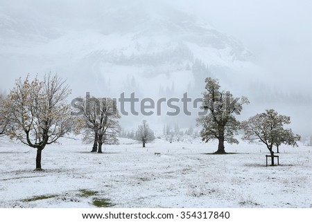 Snow covered maple trees on meadow by the mountainside in a foggy gloomy morning ~ Beautiful maple trees and the first snow in deep autumn in Austrian Alps ~ Frozen world - stock photo